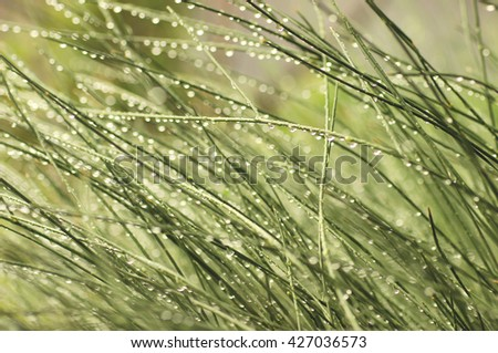 Morning dew on green grass defocused background - stock photo
