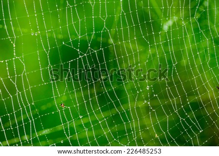 Morning dew. Shining water drops on spiderweb over green forest background. Hight contrast image. Shallow depth of field - stock photo