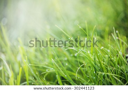 Morning drop with fresh grass - stock photo
