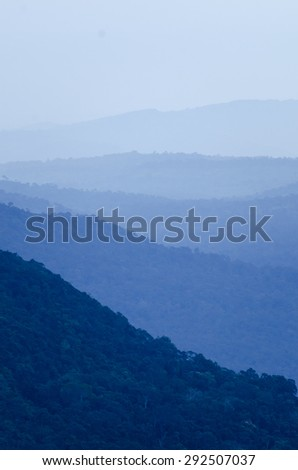 Morning fog in dense tropical rainforest at Khao Yai national park, Misty forest landscape - stock photo