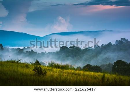 morning fog in dense tropical rainforest,Khao Yai National Park Thailand - stock photo