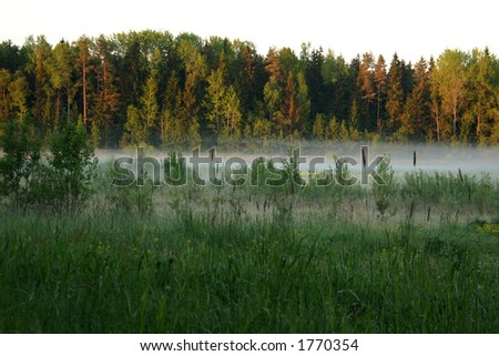 Morning fog on green meadow, Latvia - stock photo