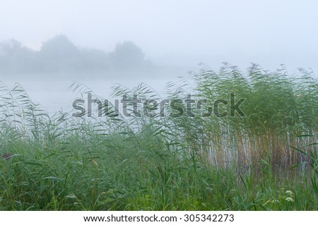 Morning fog over lake and high reed grass - stock photo