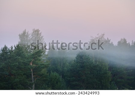 morning fog over the forest in Latvia - stock photo