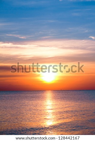 Morning Glory - stock photo