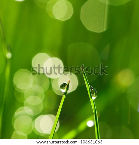 Morning grass with dew drops - stock photo