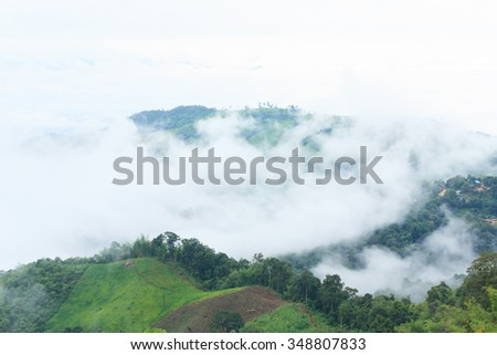 Morning in fog and green forest on mountain in Doi Chang, Chiang Rai, Thailand. - stock photo