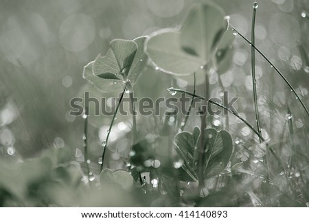 Morning in the field.Morning light over the wildflowers. Shallow depth of field.Dew drops on the grass  - stock photo