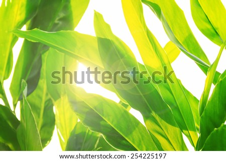 Morning in the forest, abstract natural backgrounds - stock photo