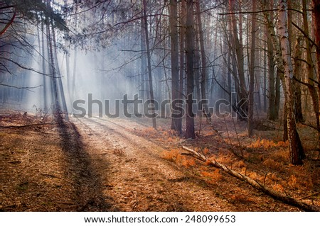 morning in the forest, sunshine in the forest  - stock photo