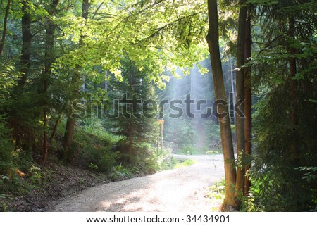 Morning in the wood with sun beam - stock photo
