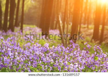 Morning in the woods - stock photo