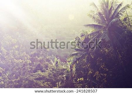 Morning in Tropical Rainforest, Bali landscape, Ubud, Indonesia - stock photo