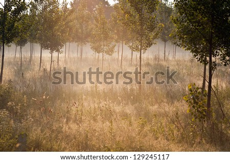 Morning landscape - stock photo