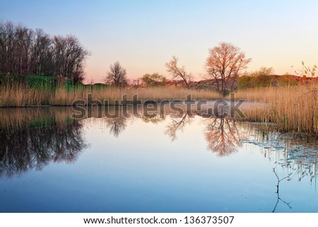 Morning landscape with reeds in the pond - stock photo