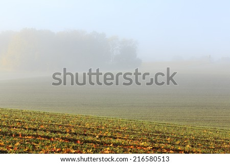 Morning light and fog in Kashubia province in north Poland/Morning fog light - stock photo