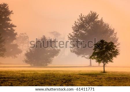 Morning mist reflects light of sunrise - stock photo