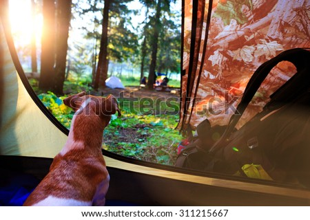 Morning mood in the campaign. Dog dawn in a tent. Series of photos. dreamy romantic - stock photo