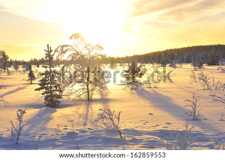 Morning mood in winter, lapland, sweden - stock photo