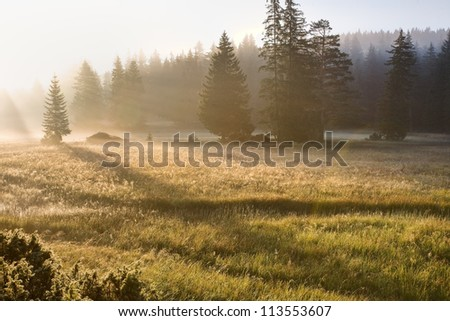 Morning mountain landscape with waves of fog - stock photo