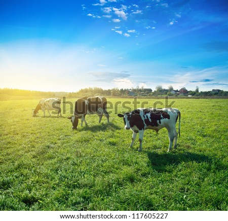 Morning pasture. Summer good weather shot - stock photo