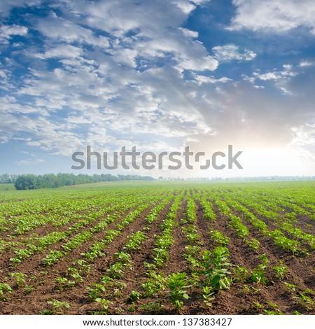 morning rural scene - stock photo