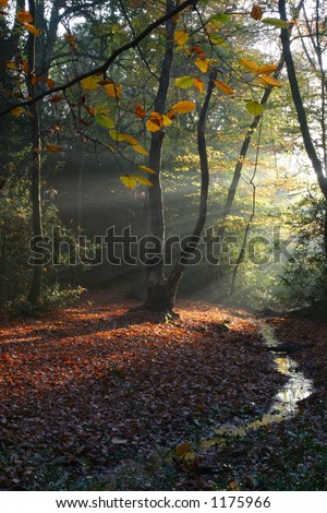 morning sun - stock photo