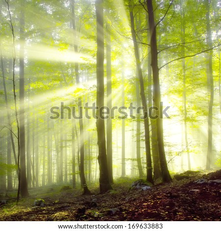 Morning sun beams in the blurry spring forest. - stock photo
