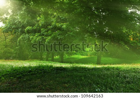 Morning sun beams in the park - stock photo
