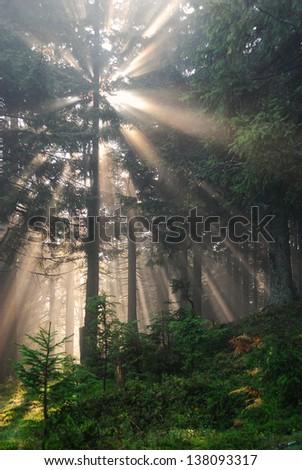 Morning sun beams thorough trees and greens - stock photo