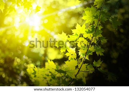 morning sun in a forest - stock photo