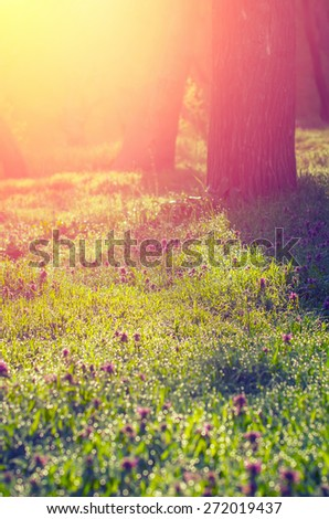 Morning sun rays fall on the green grass with dew in the light mist. Vintage composition - stock photo