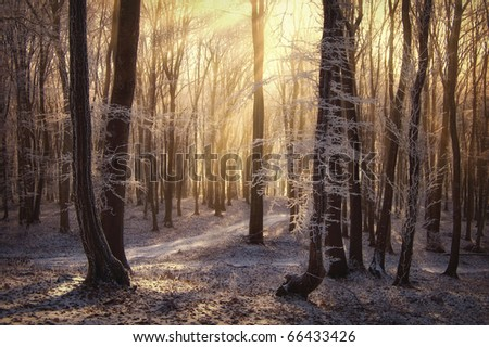 morning sun rays in a forest with frozen trees in winter - stock photo
