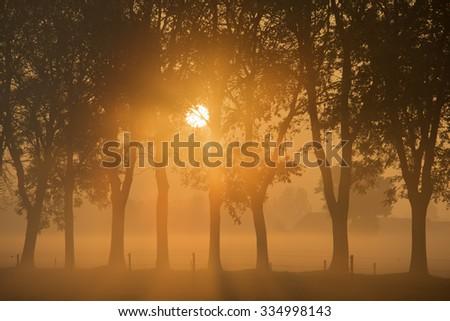 Morning sun through trees  - stock photo