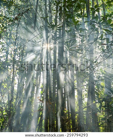 morning sunlight and smoke in Borneo tropical bamboo forest  - stock photo