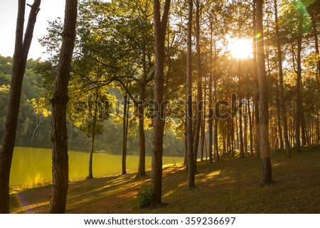 Morning sunrise at Pang-ung, Pine forest in Mae Hong Son,Thailand - stock photo
