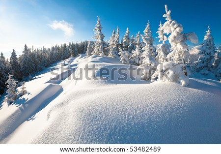 Morning winter calm mountain landscape with beautiful fir trees  on slope (Kukol Mount, Carpathian Mountains, Ukraine) - stock photo