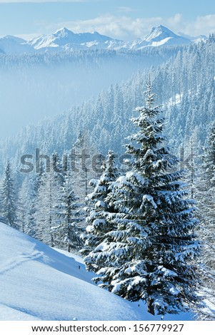 Morning winter misty mountain landscape with fir forest on slope. - stock photo