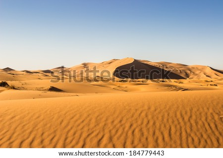 MOROCCO - JANUARY 15, 2014: Sahara desert dunes, clear blue sky - stock photo
