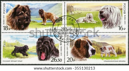 MOSCOW, RUSSIA - MAY 28, 2015: A stamp printed in Russia shows South Russian, Caucasian, Central Asian Shepherd Dog, Black Russian Terrier, series fauna, service breeds of dogs - stock photo