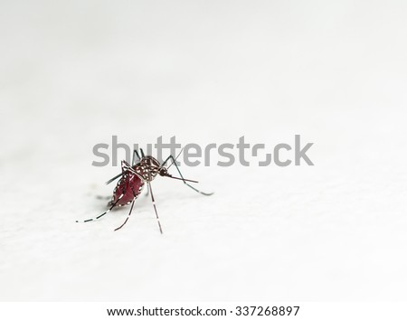 mosquito after suction. - stock photo