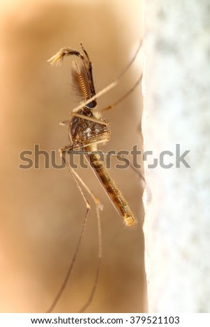 Mosquito in the forest THAILAND - stock photo