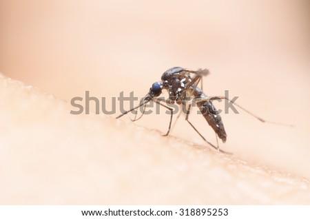 mosquito,malaria - stock photo
