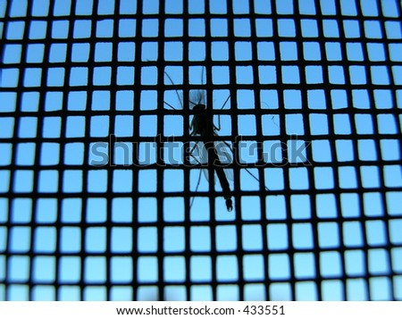 mosquito on a screen - stock photo