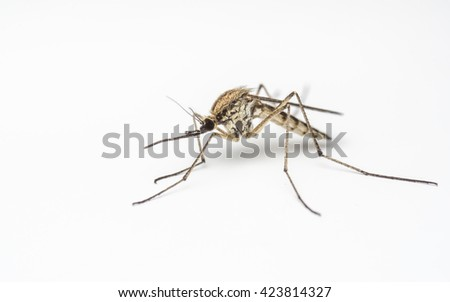 Mosquito on a white background - Macro photo - stock photo