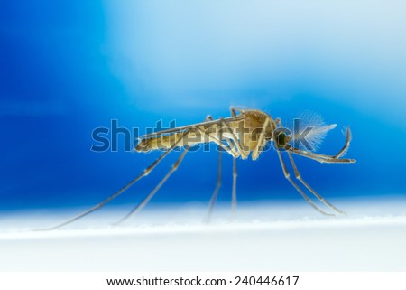 Mosquito on blue background - stock photo