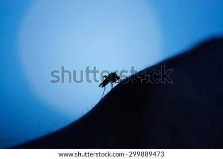 mosquito on human skin at night - stock photo