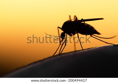 mosquito on human skin at sunset - stock photo
