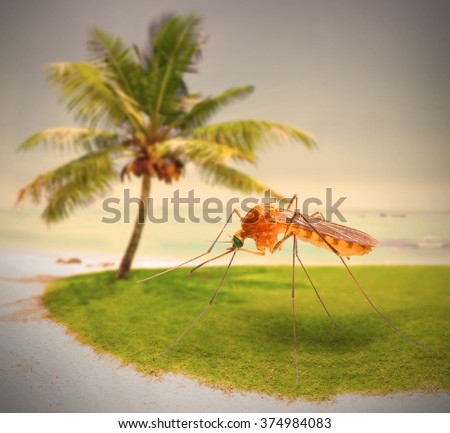 Mosquito on tropical beach, dangerous vehicle of zika, dengue, chikungunya, malaria and other infections. Digital artwork on pest and infection control theme. - stock photo