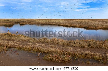 Mosquitoes swarming over stagnant water - stock photo